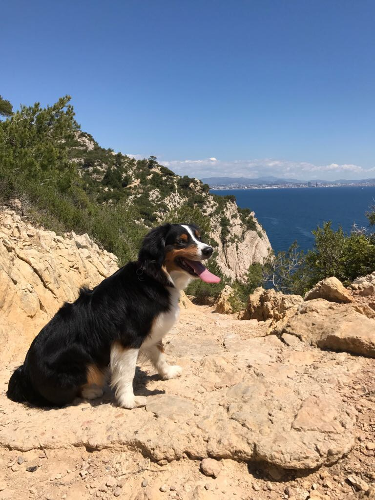 Discover Europe with your dog - Travel, Events & Culture