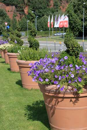 flowers at the Kaiserslautern Garteschau