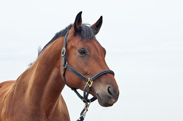 horses-1040953_640 five-best-outdoor-breaks-europe May 16