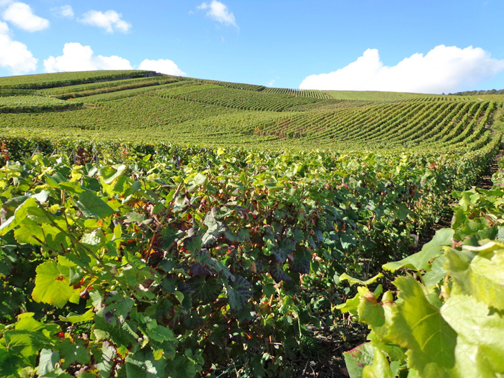 Take a Visit to Champagne in France