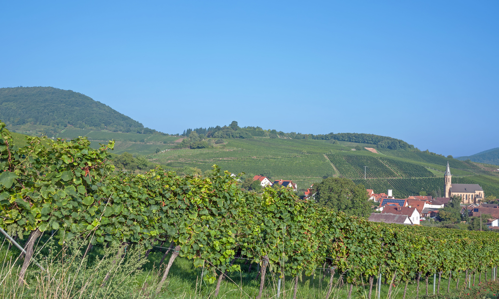 The German Wine Route vineyard