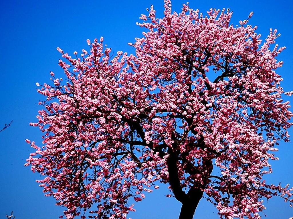Blossom Photo 1