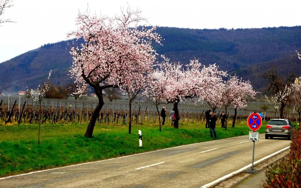 Blossom Photo 2