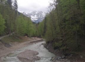 Garmisch 10 forest