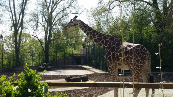 stuttgart 39 s wonderful wilhelma zoo travel events culture tips for americans stationed in. Black Bedroom Furniture Sets. Home Design Ideas