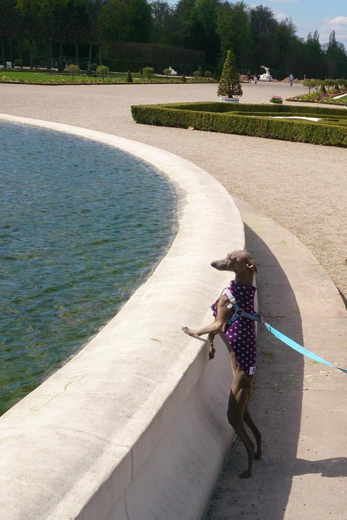 dog at fountain
