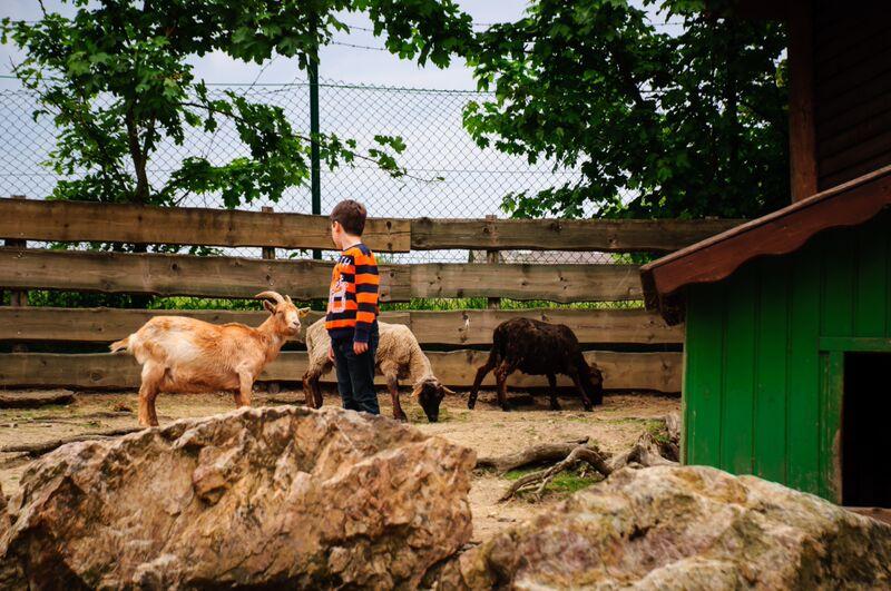 Taunus Wunderland petting zoo goats