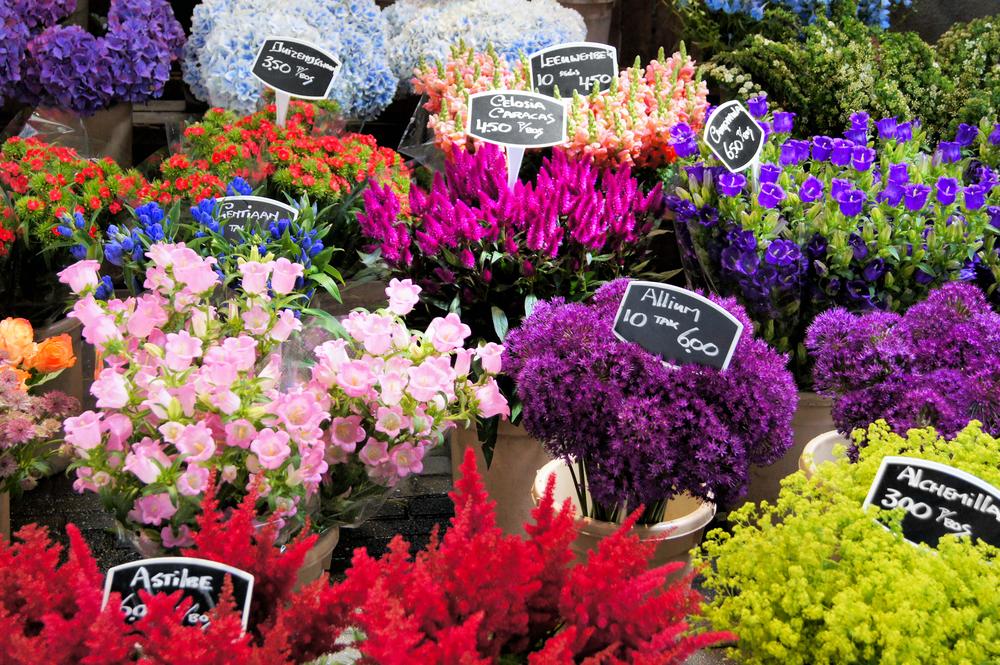 Amsterdam flowers