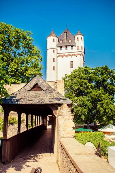 Elector's Castle Garden