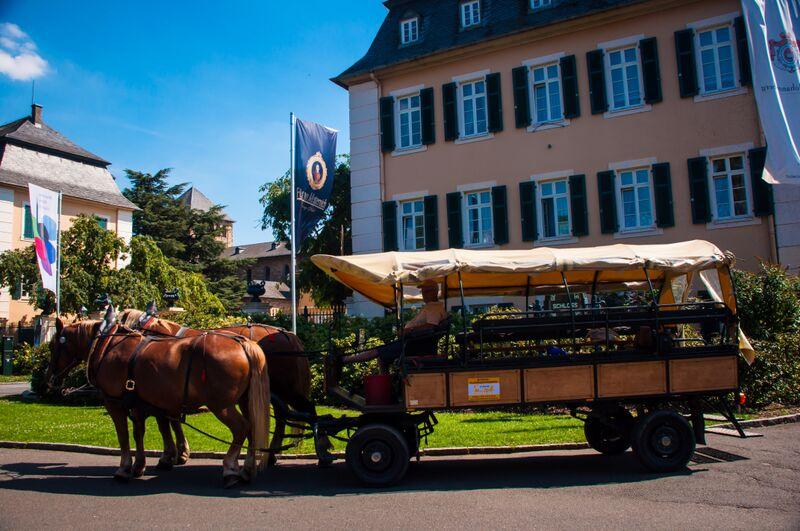 11 Johannisberg 3 Gemma Horse and carriage ride