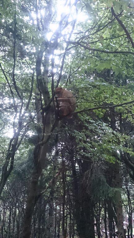 Monkey in tree Kelly Monkey Mountain
