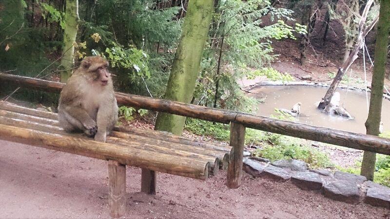 Monkey on bench Kelly Monkey Mountain