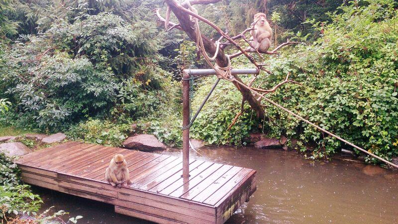 Monkey on gym Kelly Monkey Mountain