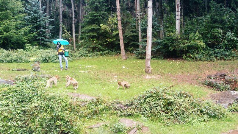 Monkeys with keeper Kelly Monkey Mountain