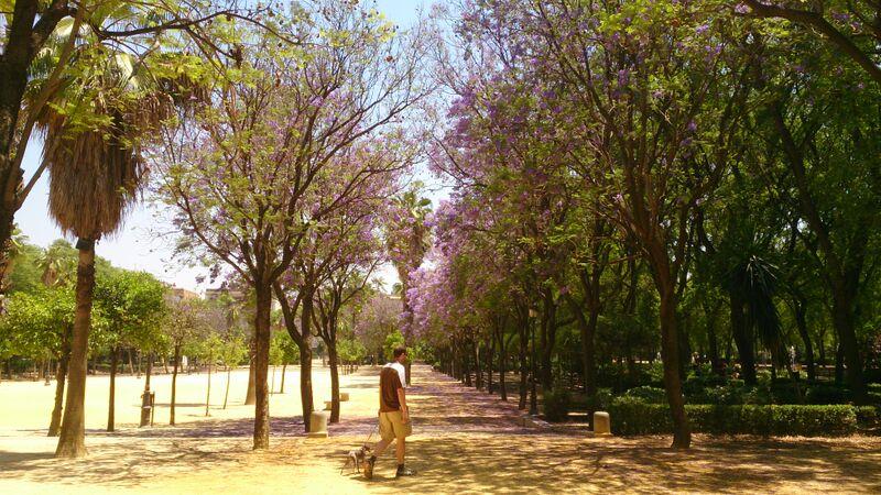 Kelly Seville Park