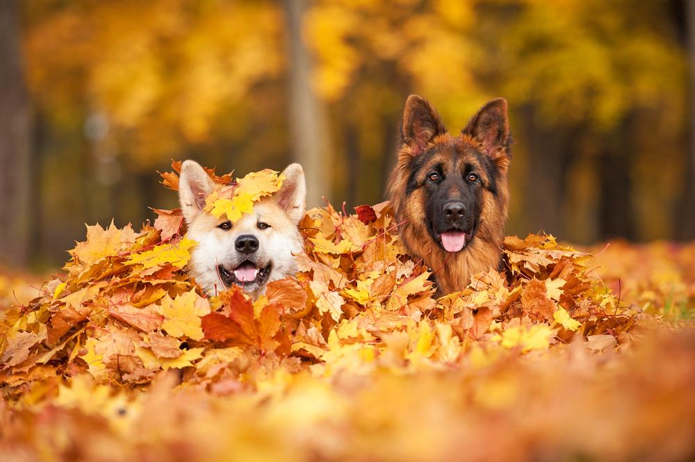 dogs Rita Kochmarjova shutterstock_161451260