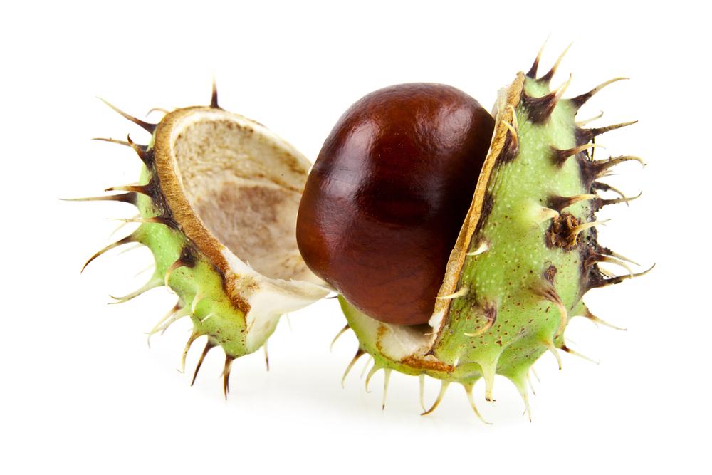 valzan chestnuts shutterstock_321471422