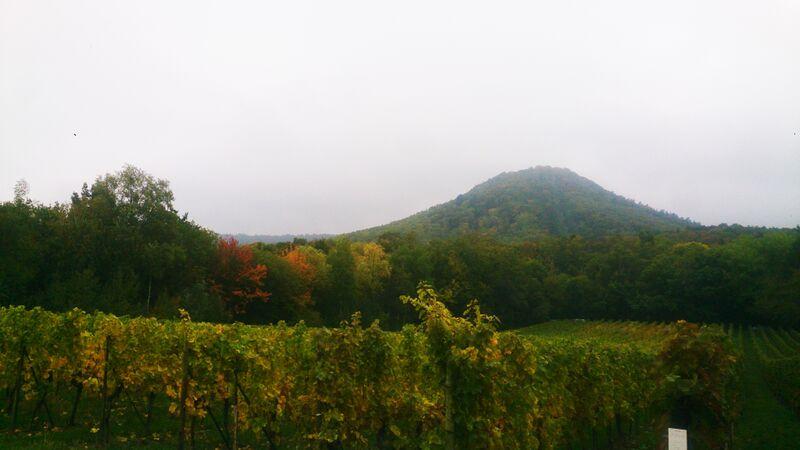 views Kelly Edenkoben Wine