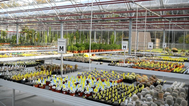 Kakteenland Greenhouse alphabet Kelly Kakteenland Steinfeld