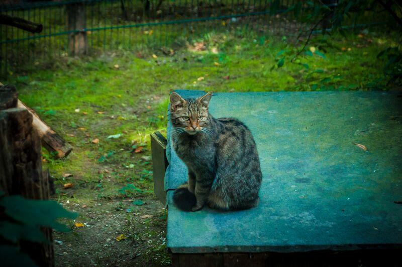 cat 1315 Gemma Opel Zoo
