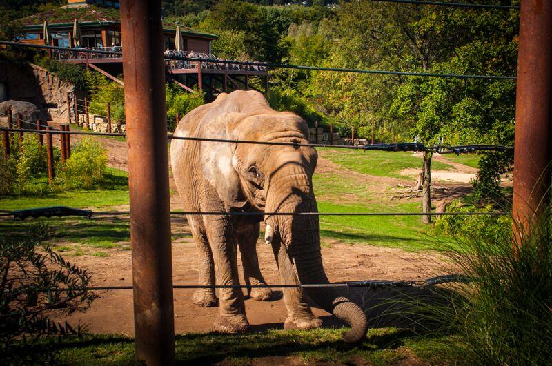 elephant 1298 Gemma Opel Zoo