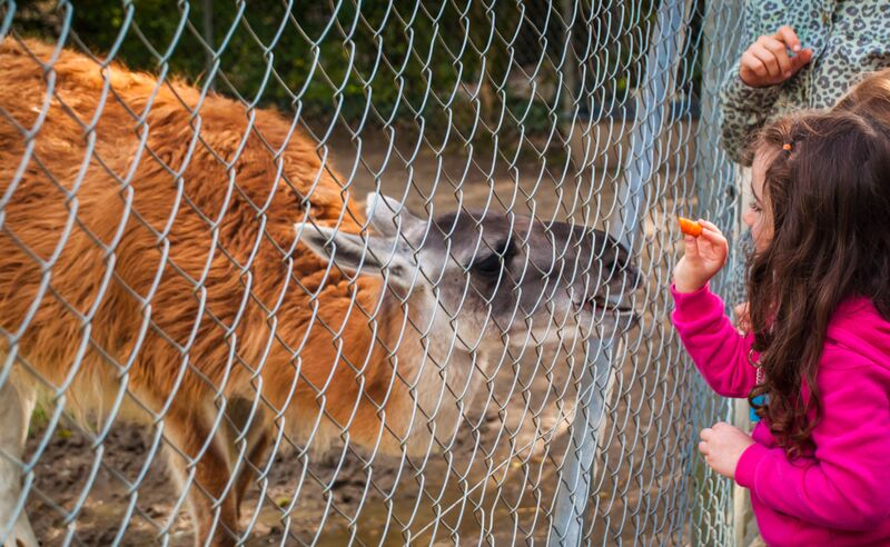 girl feeding animal 1333 Gemma Opel Zoo