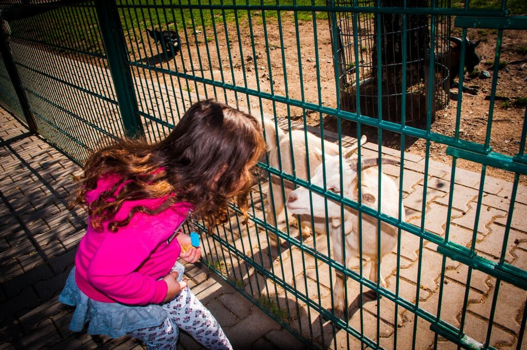 girl looking at goat 1295 Gemma Opel Zoo