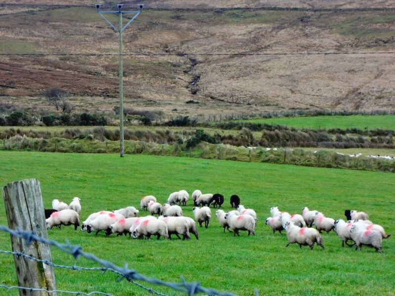 Photo 8 Cheryl The Best of Ireland in 5 Days ~ Part 2, Dingle Peninsula