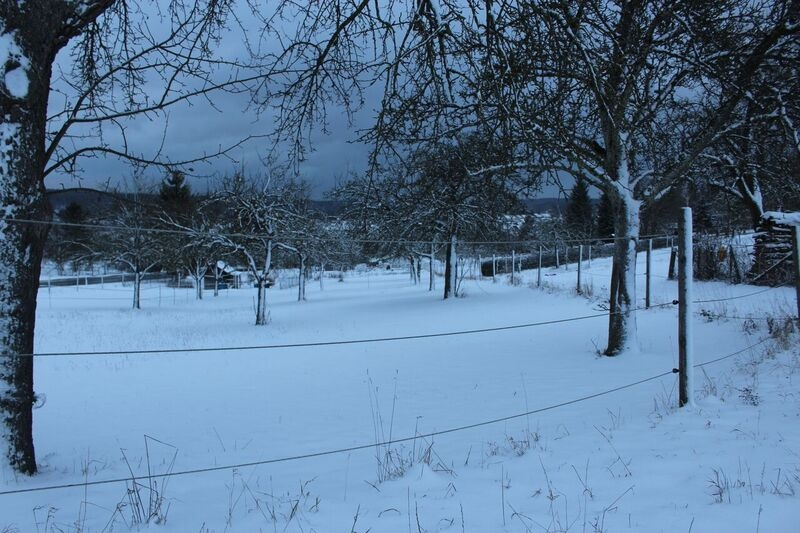 Winter scene Wendy Winter fun in the Black Forest