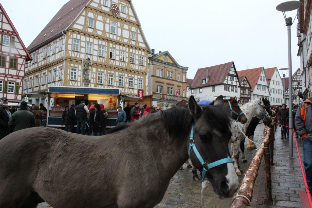 Horse market Wendy Leonberg Horse Market 16