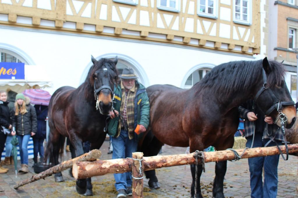 Kleisdale Wendy Leonberg Horse Market 16