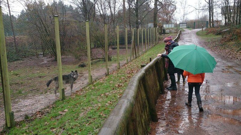 Visitors Kelly Merzig Wolf Park 16