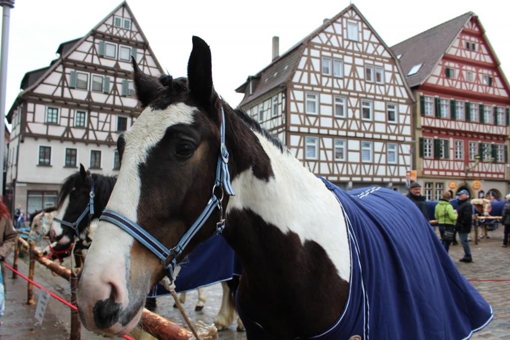 White black horse Wendy Leonberg Horse Market 16