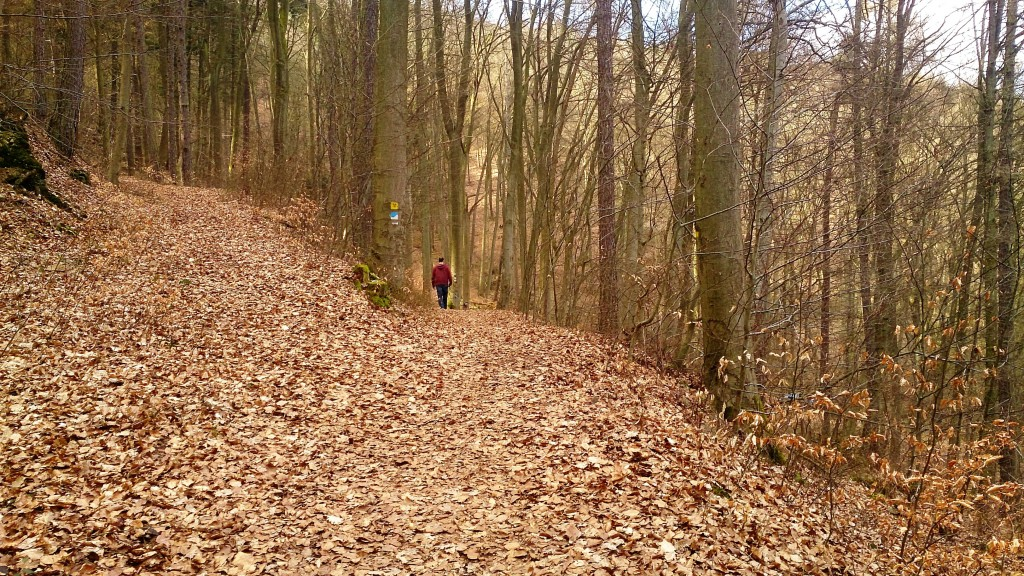 Hiking path between castles Kelly Wolfstein A Short Daytrip from Kaiserslautern 16