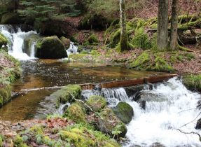 MIG - waterway Wendy Bad Wildbad, Baths and Blueberries 16
