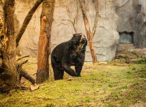 -0298 Gemma Frankfurt Zoo Animals and the City May 16