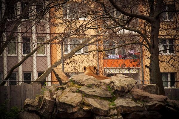 -0302 Gemma Frankfurt Zoo Animals and the City May 16