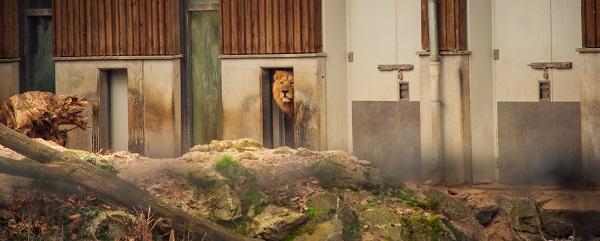 -0303 Gemma Frankfurt Zoo Animals and the City May 16