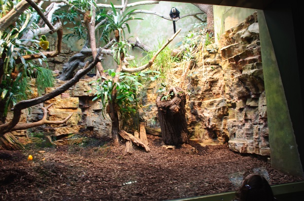 -0322 Gemma Frankfurt Zoo Animals and the City May 16