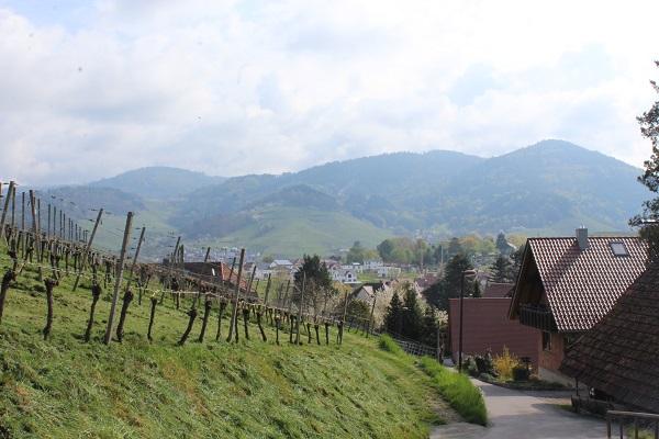 MIG vineyard view Wendy Wine Walks near Stuttgart May 16