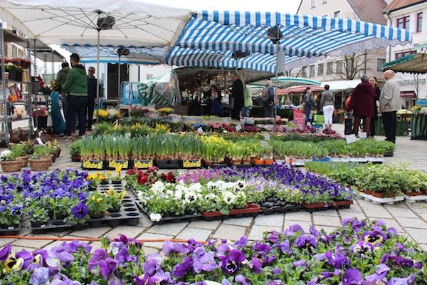 MIG - Ehingen market (1) Wendy Beer Culture and the town of Ehingen June 16