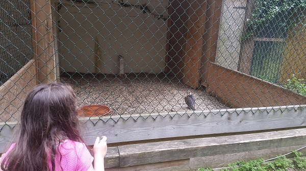 20160604_161530 Gemma Niederwald Eagle Sanctuary July 16