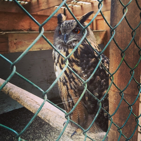 IMG_20160703_225138 Gemma Niederwald Eagle Sanctuary July 16