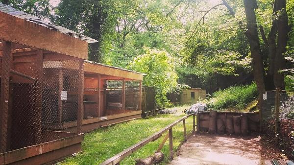 IMG_20160703_225409 Gemma Niederwald Eagle Sanctuary July 16