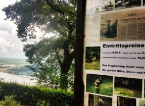 main Gemma Niederwald Eagle Sanctuary July 16